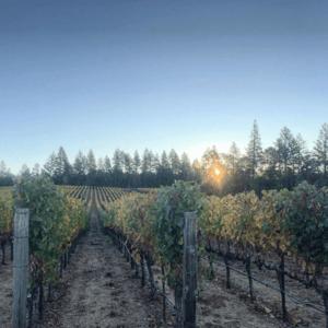 aloft vinyard